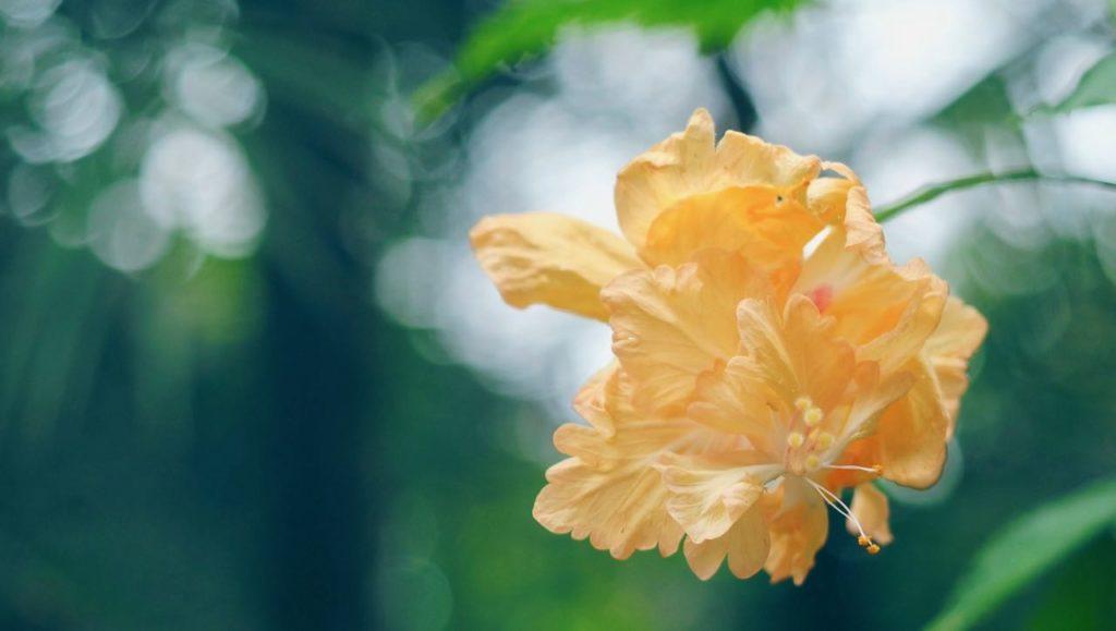 温室の花を楽しむ
