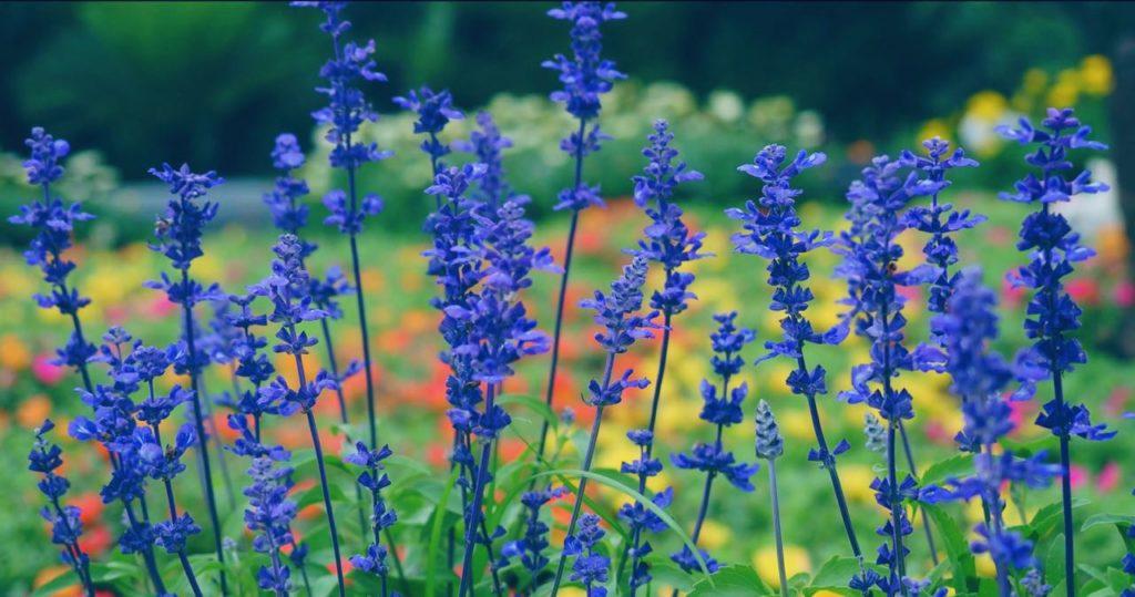 四季の花を楽しめるフラワーガーデン
