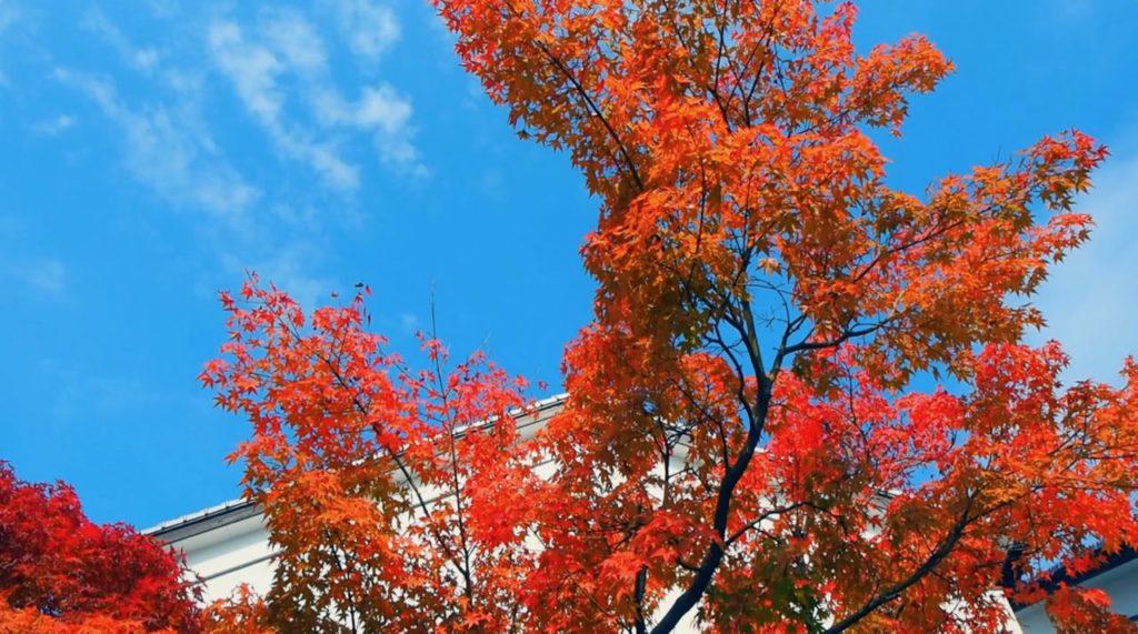 金鱗湖で紅葉を楽しむ