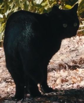 幸運を呼ぶ黒猫と出会う