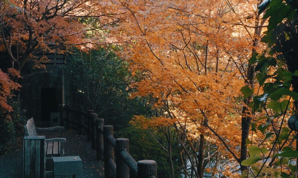 晩秋は紅葉が鮮やかな黒川温泉街