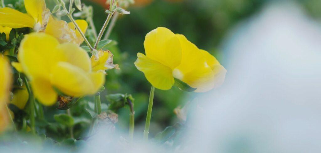 春の花と木々